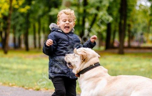 Фобия боязнь собак. Кинофобия - боязнь собак: что делать, чтобы не было страха