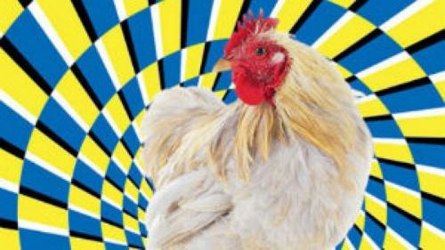 Как загипнотизировать курицу. Магия для каждого: как загипнотизировать курицу