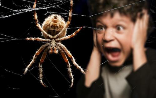 Фобия пауков. Как называется боязнь пауков и как перестать их бояться?