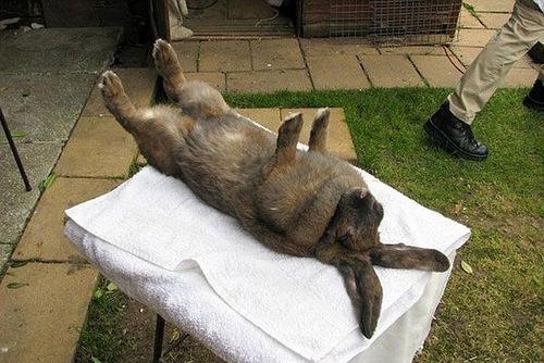 Как кошку ввести в транс. Гипноз кошек и животных