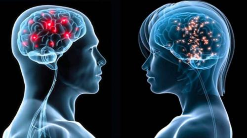 Женский мозг vs мужской мозг.