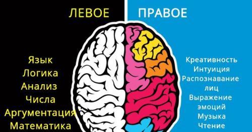 Работа полушарий мозга у мужчин и женщин. Разделение функций