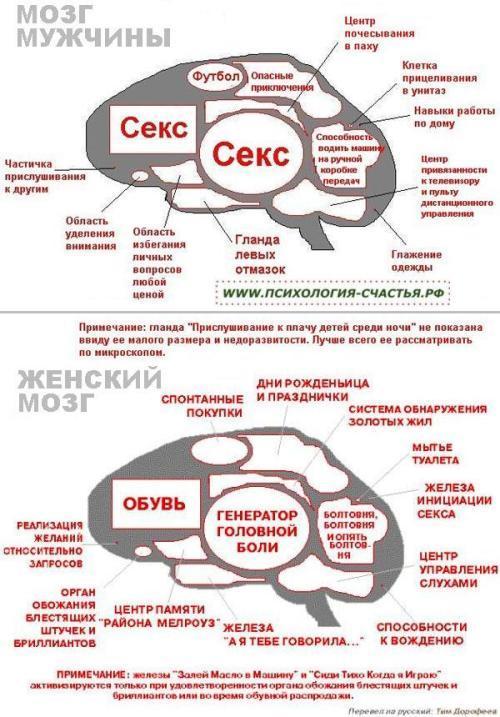 Чем отличается женский мозг от мужского. Мозг мужчины и женщины — основные различия