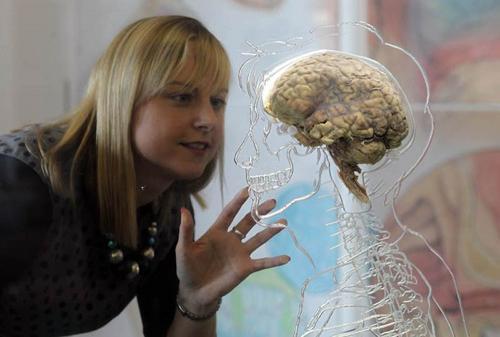 Сколько весит мозг мужчины и женщины.