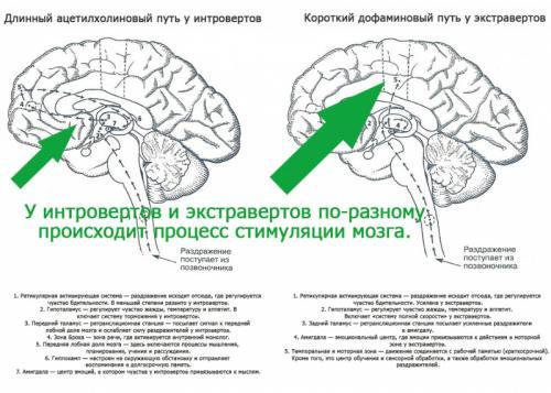 Разница между экстравертом и интровертом. Интроверты