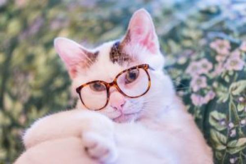 Жизнь в розовых очках цитаты. Любопытные цитаты про очки