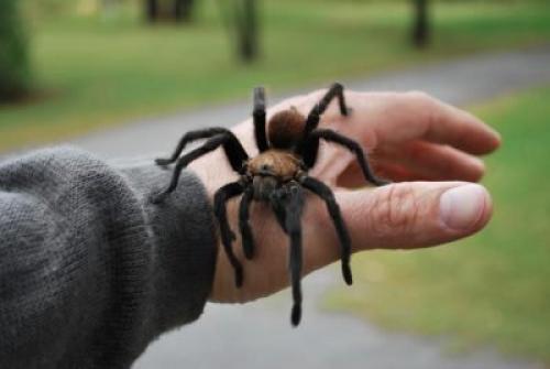 Фобия пауков. Борьба с боязнью пауков