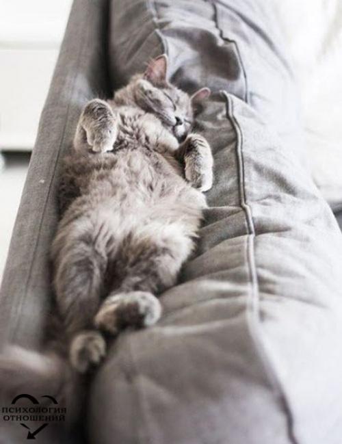 Можно не высыпаться, быть усталым, измотанным, иметь серьезные проблемы, быть простуженным, но при этом быть абсолютно счастливым.
