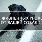 10 жизненных уроков от вашей … собаки?